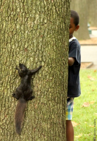 tree, squirrel, child, lake, NYC, central park